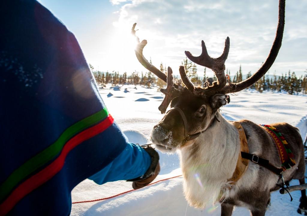 lola_akinmade_åkerström-sami_with_reindeer-2607